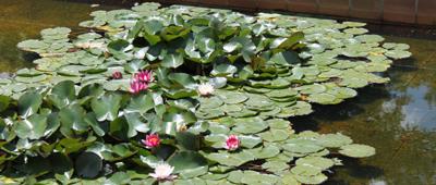 Curso online dise o de jardines criterios y c lculos - Disenar jardin online ...