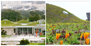 Academia de Ciencias de California. San Francisco.