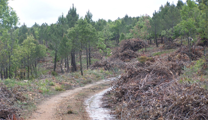 Biomasa y gvSIG 02