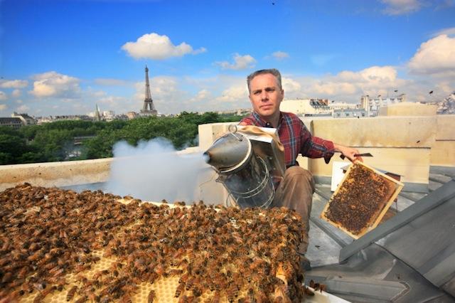 Abejas en ciudad La apicultura urbana en cubiertas vegeales