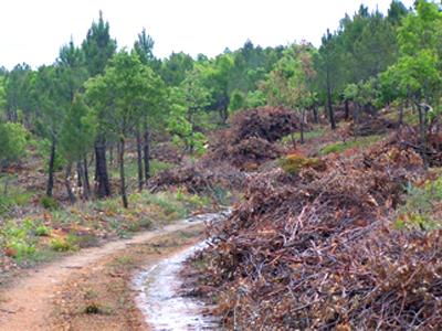 Aprovechamiento energético de biomasa y aplicación en SIG