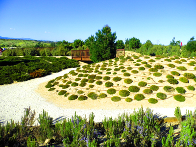 Curso de Diseño de jardines: criterios y cálculos hídricos