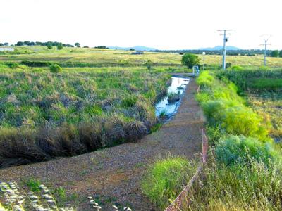Humedales artificiales en depuración de agua residual