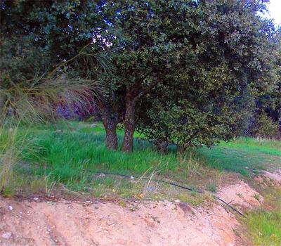 El suelo en el jardín