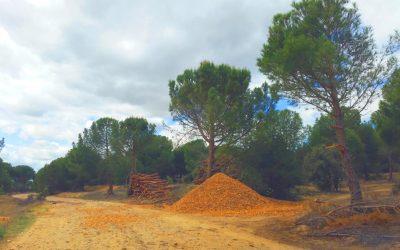 Aprovechamiento de biomasa