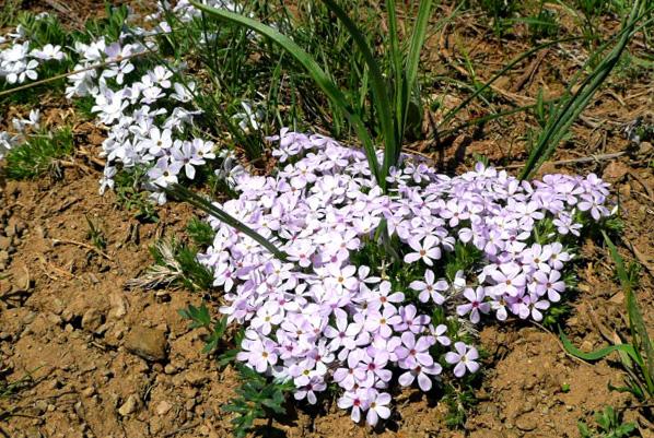 Los principales problemas del riego por goteo en jardines