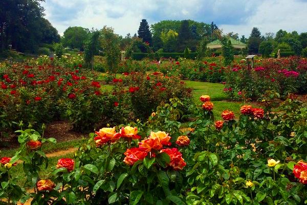 ¿Quieres ser diseñador de jardines?