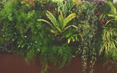 Construye un jardín vertical en la terraza